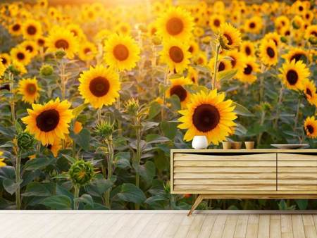 Photo Wallpaper Sunflower field