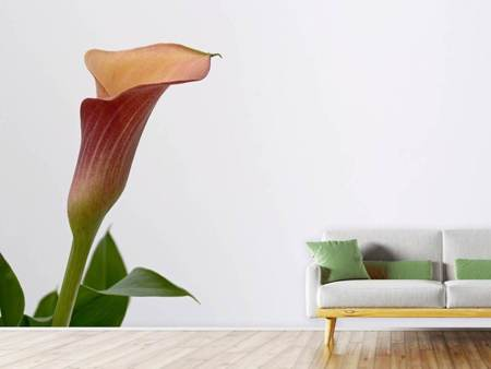 Photo Wallpaper Calla in XL