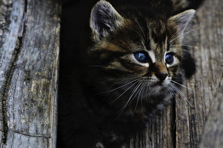 Fototapete Katzen Kind