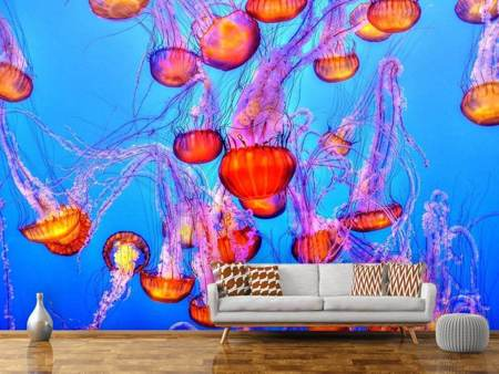 Photo Wallpaper Colorful jellyfish