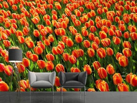 Papier peint photo Champ de tulipes en orange