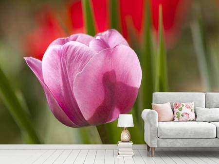 Photo Wallpaper Tulip pretty in pink