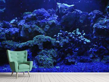 Photo Wallpaper Coral reef in blue