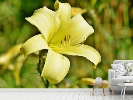 Photo Wallpaper Lilies blossom in yellow
