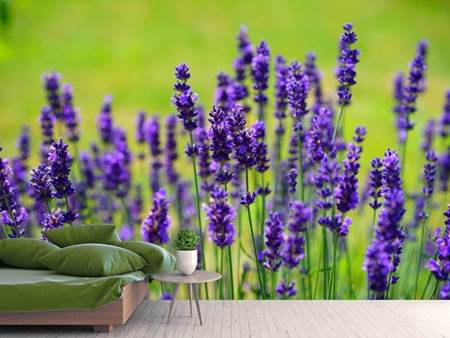 Photo Wallpaper Beautiful lavender
