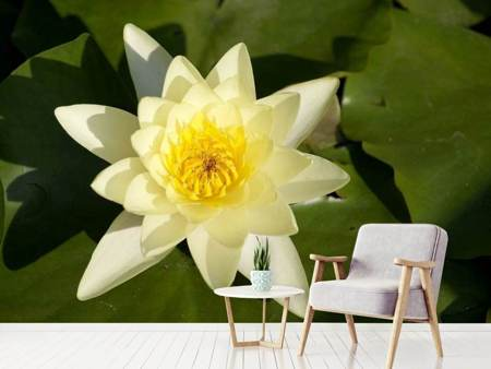 Photo Wallpaper The water lily in yellow