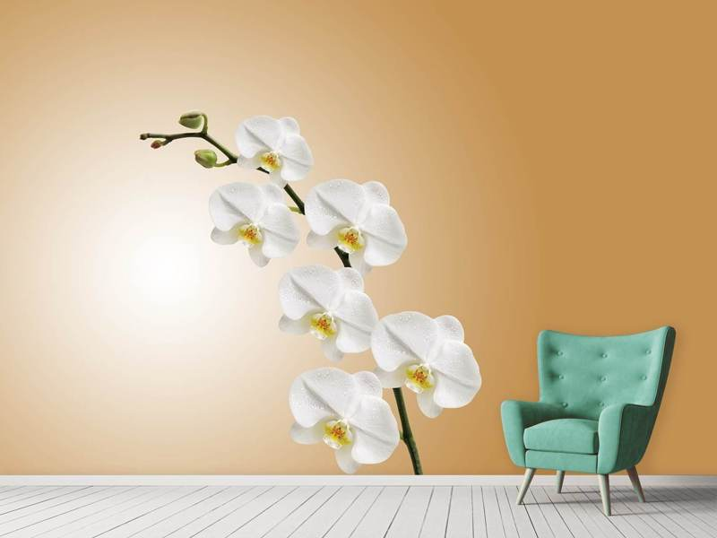 Fotomurale Orchidee bianche XL