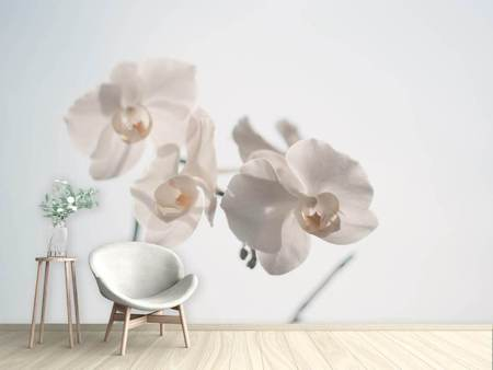Photo Wallpaper Graceful orchids