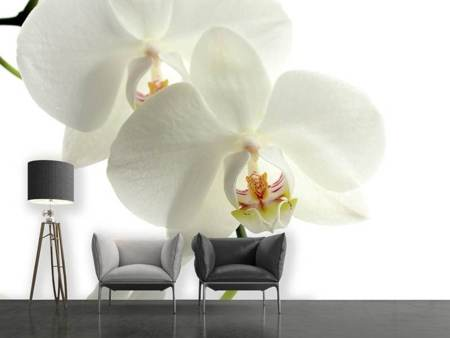 Fototapet Orchids bloom
