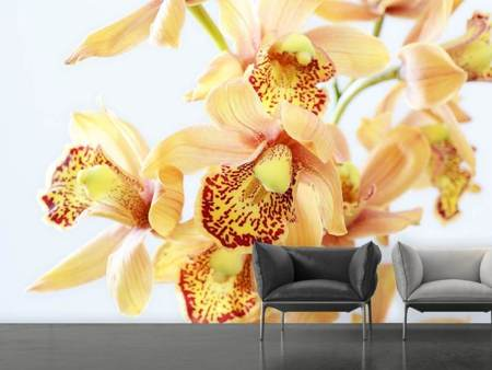 Photo Wallpaper Yellow orchid