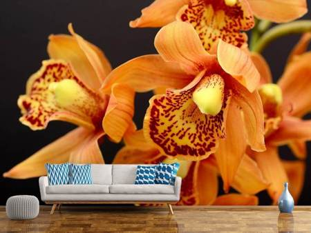Photo Wallpaper Orchids with orange flowers