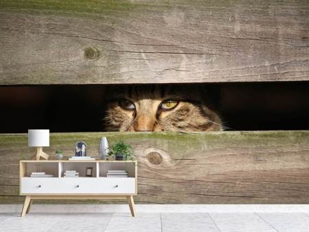 Photo Wallpaper Cat in hiding