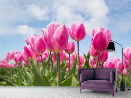 Papier peint photo Champ de tulipes en rose