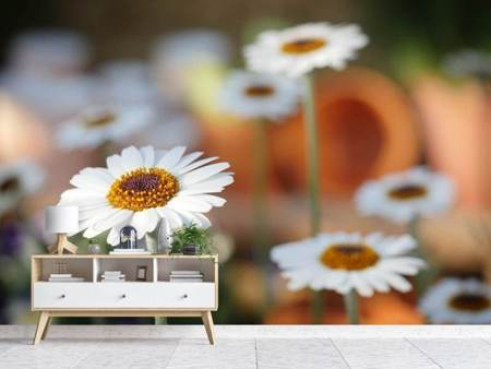 Photo Wallpaper Daisies XL