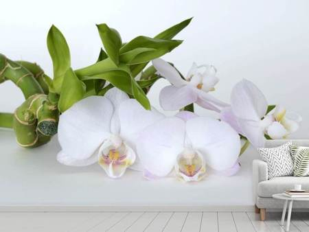 Photo Wallpaper Orchid and bamboo