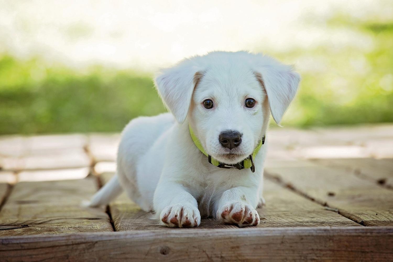 Fototapete Süsses Hunde Baby