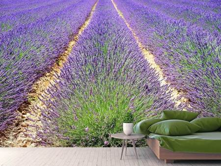 Fototapet The lavender field