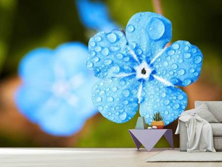 Photo Wallpaper Blue flower with morning dew