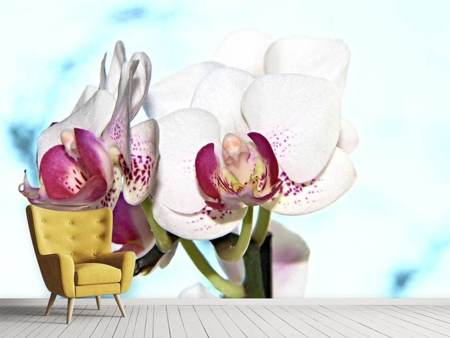Photo Wallpaper Impressive orchid