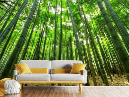 Fotobehang The bamboo forest