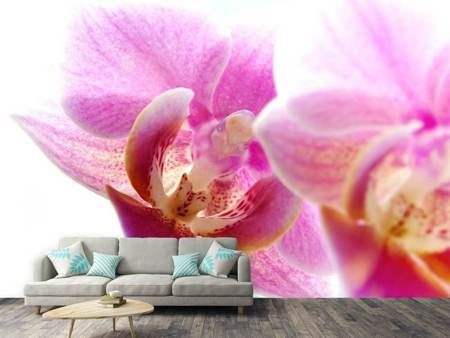 Photo Wallpaper Magnificent phalaenopsis