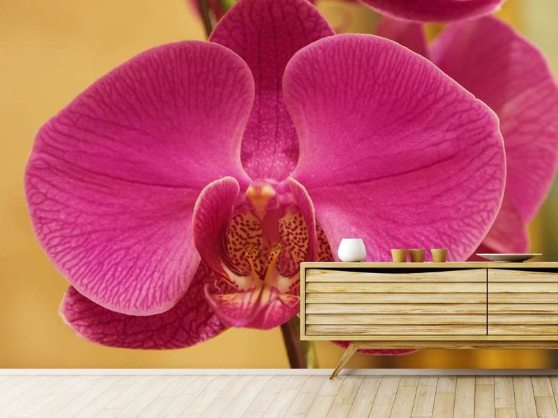 Fotobehang Close up orchid in pink