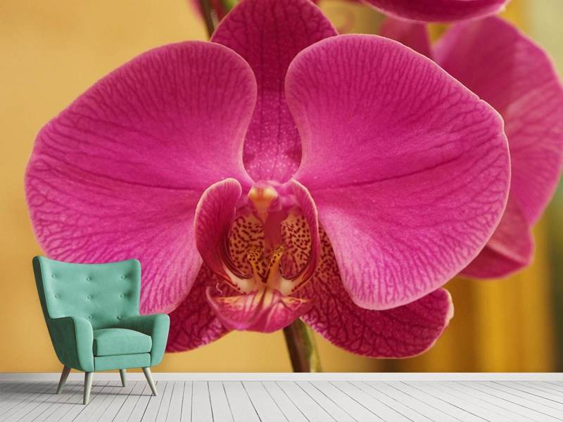 Photo Wallpaper Close up orchid in pink