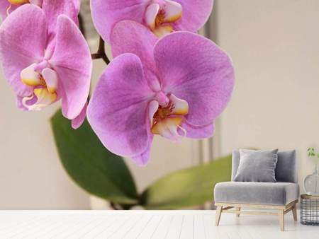 Photo Wallpaper Orchids with purple flowers in XL