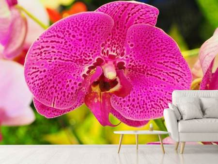Photo Wallpaper Purple Orchid XXL
