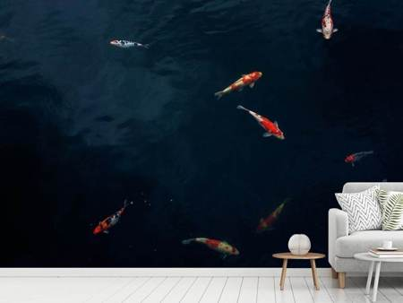 Photo Wallpaper Fish in the pond