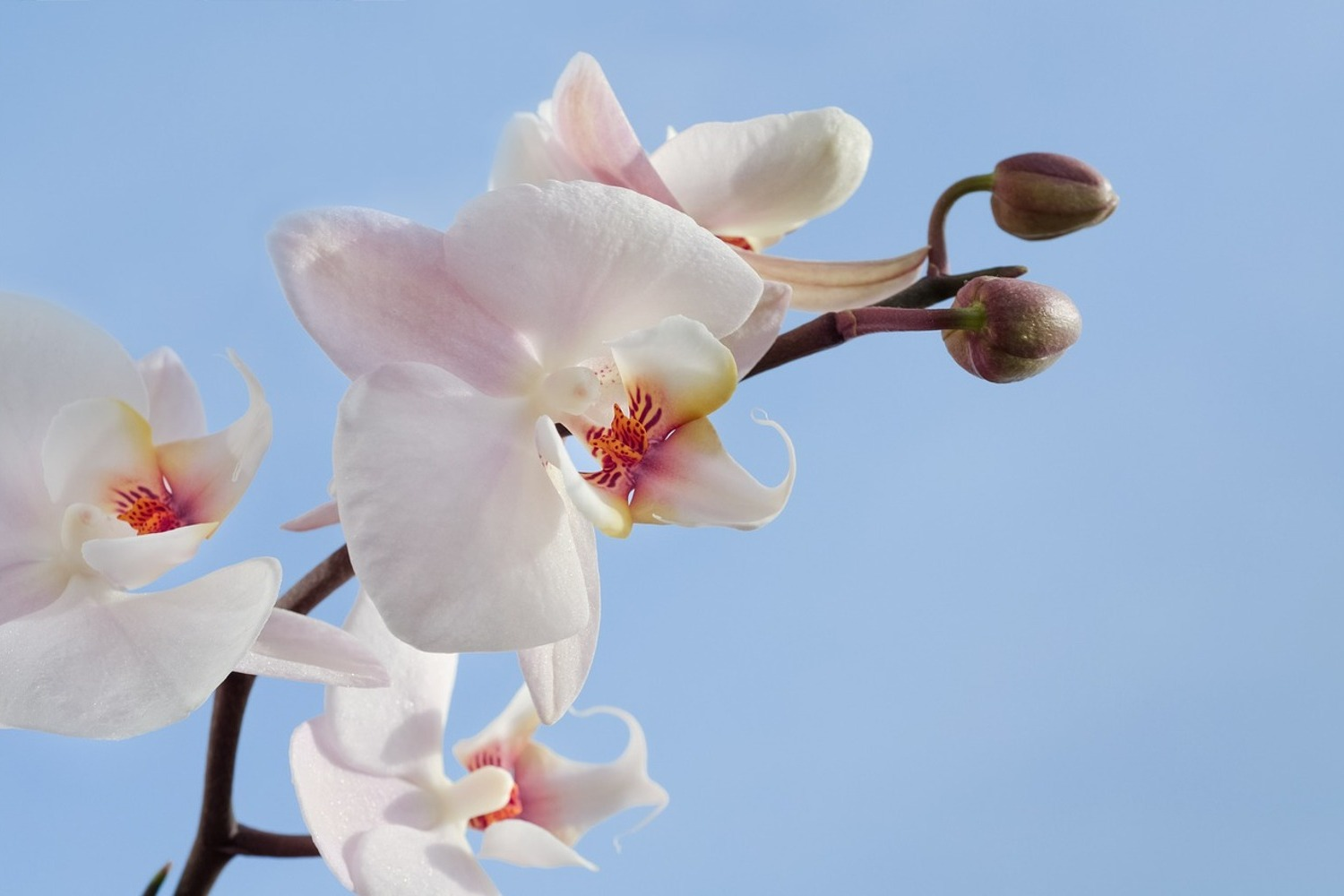Fotobehang Orchid in the sky
