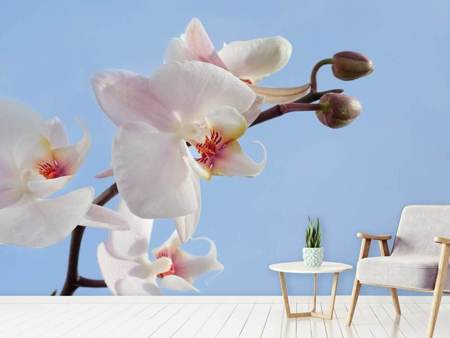 Photo Wallpaper Orchid in the sky
