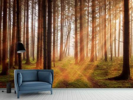 Photo Wallpaper Beams of light in the forest