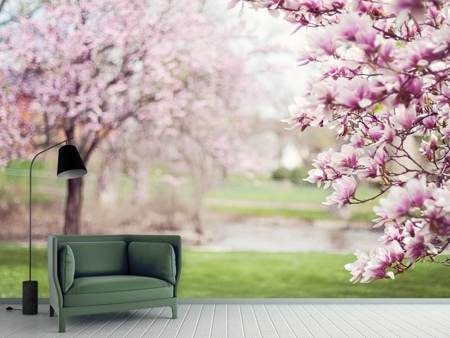 Fotobehang Beautiful magnolias