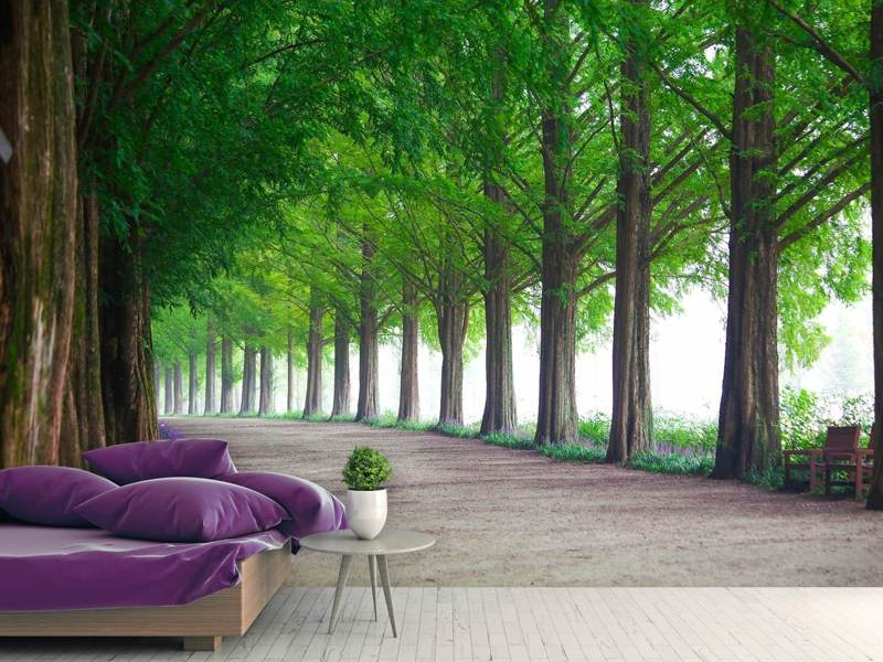 Fotobehang Beautiful tree avenue
