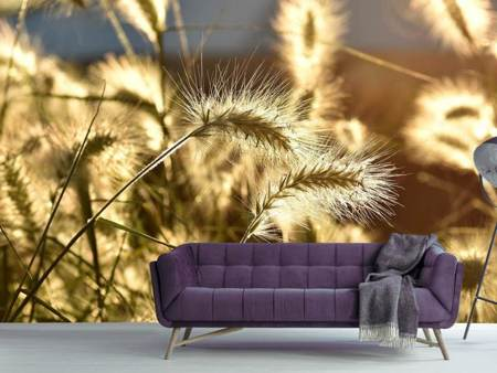 Fototapet Ornamental grass in the sunlight