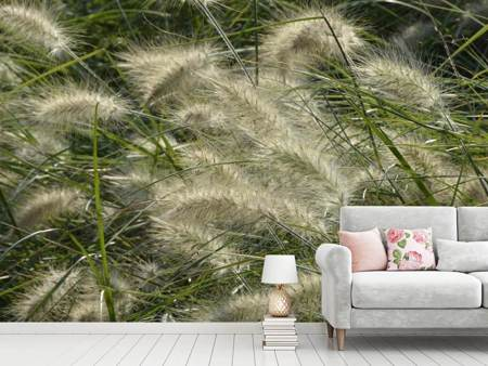 Fototapet Ornamental grass in the wind