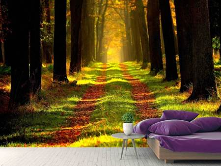 Photo Wallpaper Forest path