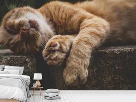 Photo Wallpaper Sleeping cat