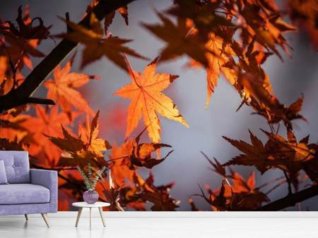 Fotobehang Maple leaves in autumn