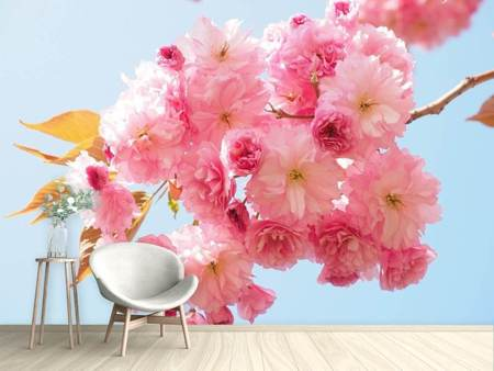 Photo Wallpaper The cherry blossoms