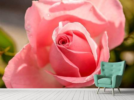 Photo Wallpaper The rose in pink