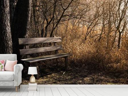 Photo Wallpaper Wooden bench in the forest