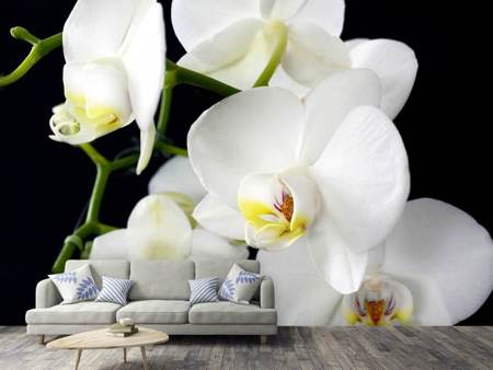 Photo Wallpaper Orchid close up