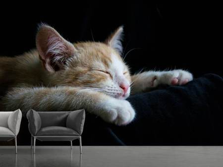 Photo Wallpaper Lazy cat