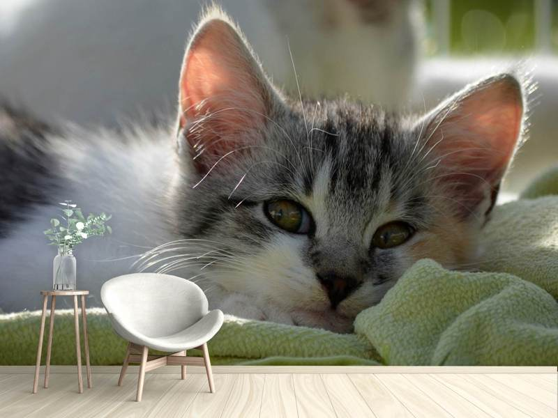 Photo Wallpaper In love with kitten