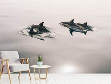 Photo Wallpaper The dolphins
