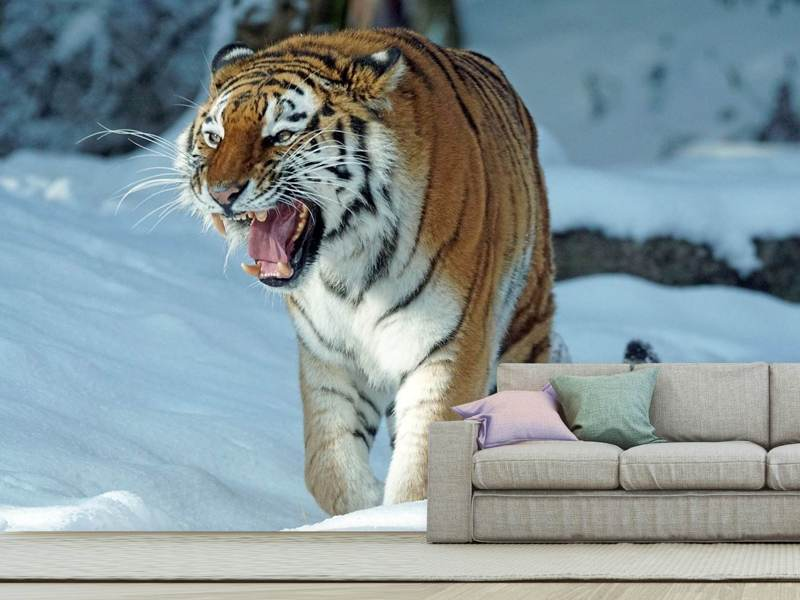Fotobehang Tiger in the snow