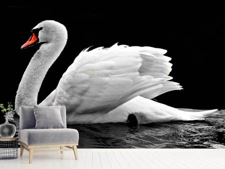 Photo Wallpaper The graceful swan