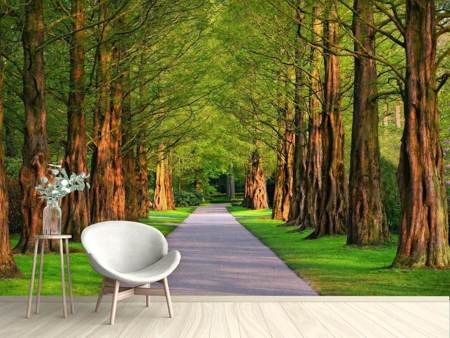 Fotobehang Beautiful avenue in nature